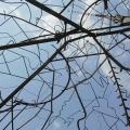 luminous-tree