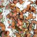 Particolare Albero di Matite (con i semi dipeperoncino)