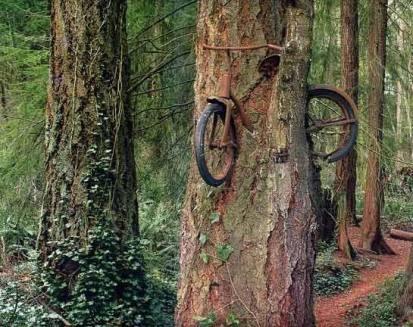 L'albero della bicicletta