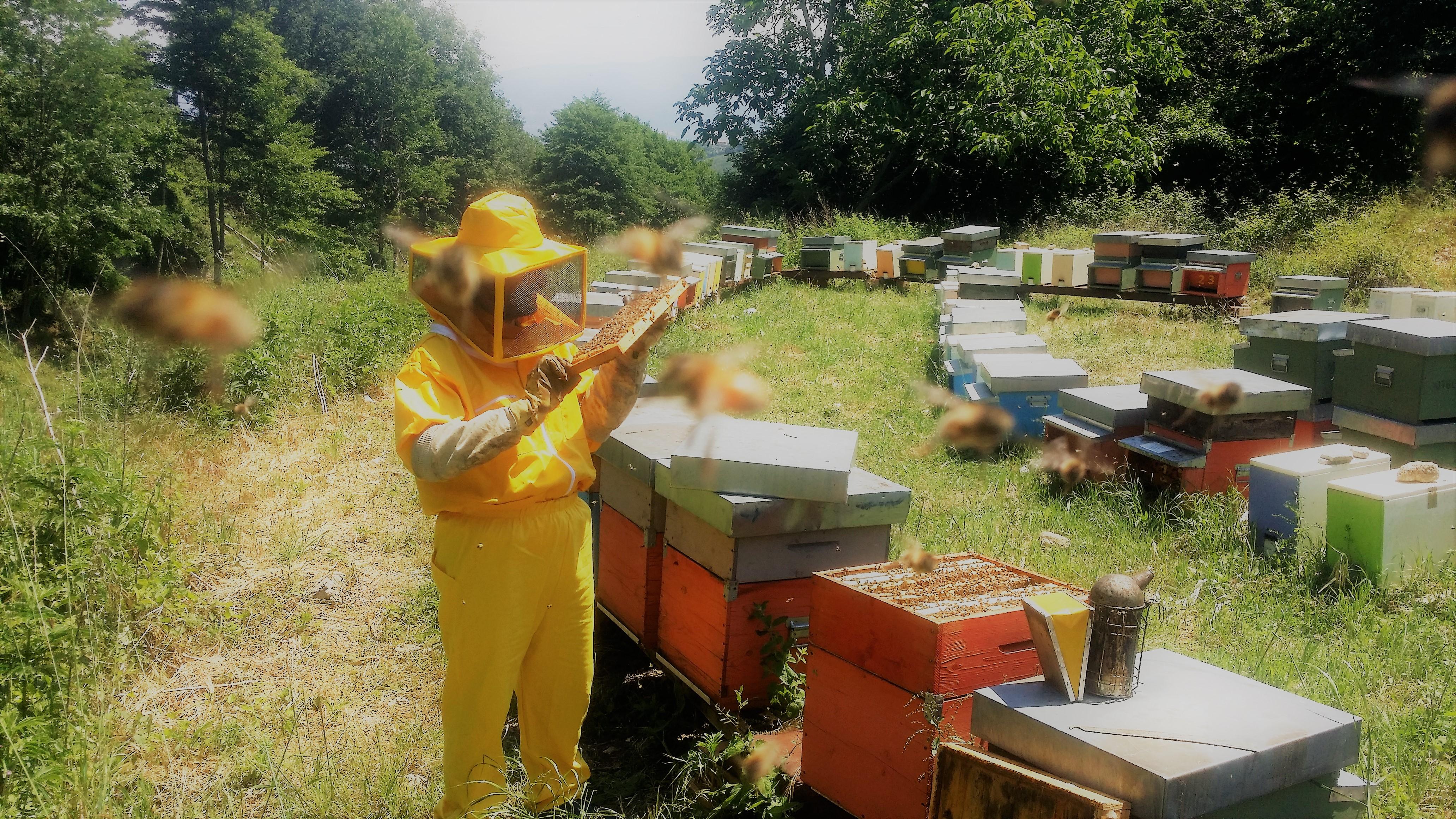 michele-dignazio-api